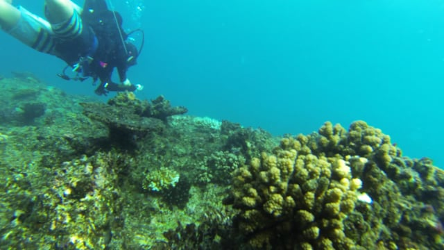 SCUBA Diving Ratu Kini Fiji